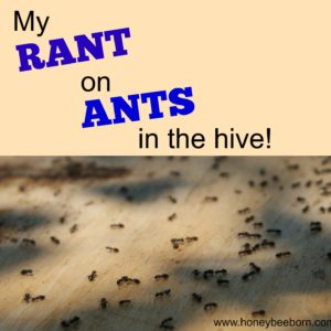 Ants in the Beehive