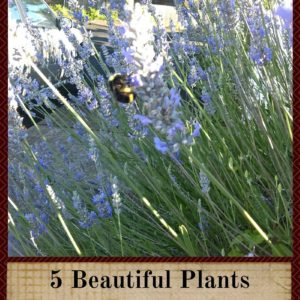 5 Beautiful Plants For Your Garden That Bees Love