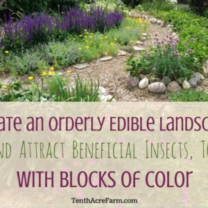 Create an Orderly Edible Landscape (and Attract Beneficial Insects, Too) with Blocks of Color