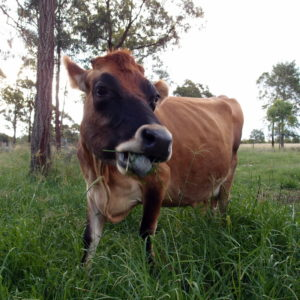 My favorite family cow blogs