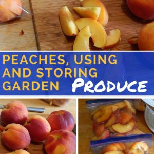 Peaches: Using and Storing Garden Produce