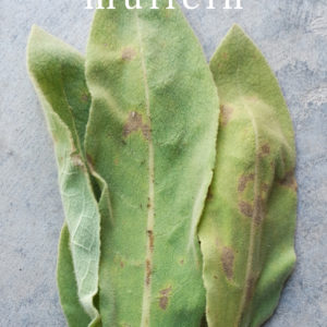 14 Ways to Use Mullein