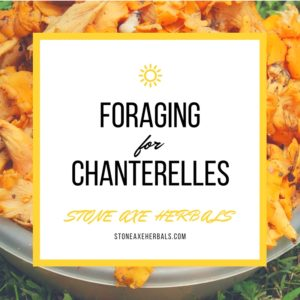 How to Find and Identify Chanterelle Mushrooms