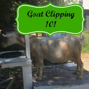 Clipping Your Goat