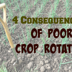 4 Consequences of Poor Crop Rotation