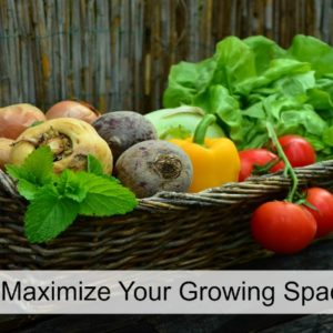 How to Maximize Your Growing Space
