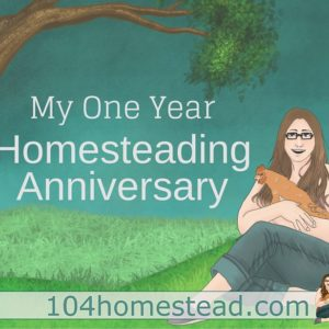 My Homesteading Anniversary: What can be accomplished in a year.