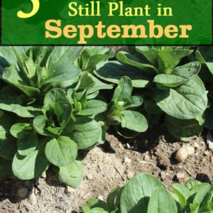 5 Crops you can still plant in September