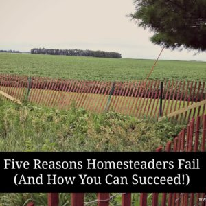 Five Reasons Homesteaders Fail (And How You Can Succeed!)