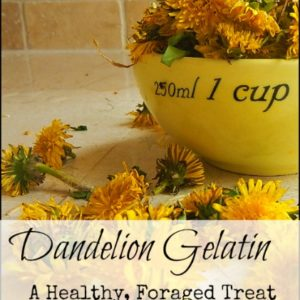 Dandelion Gelatin from the Children's Garden