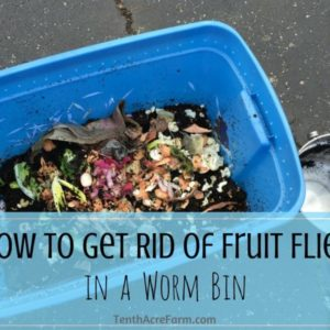 How to Get Rid of Fruit Flies in a Worm Bin
