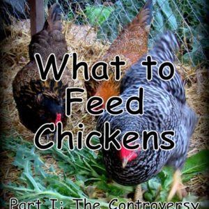 What to Feed Chickens: The Controversy