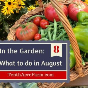 In the Garden: What to do in August