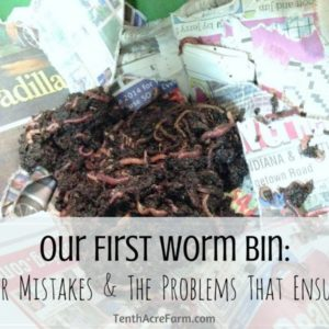 Our First Worm Bin: Our Mistakes & The Problems That Ensued