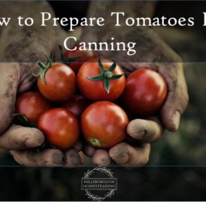 How to Prepare Tomatoes for Canning