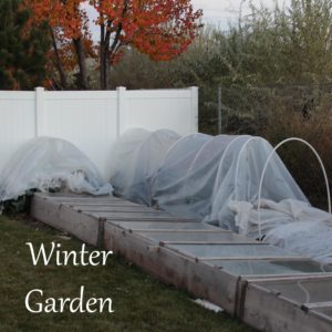 Winter Garden Structures