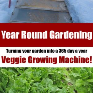Year Round Gardening – Turn your garden into a 365 day a year producer!