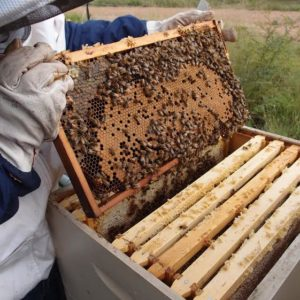 Beekeeping Before You Get Bees