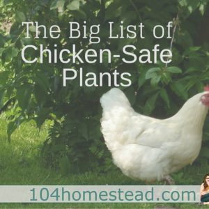 The Big List of Chicken-Safe Plants