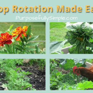 How to Do Crop Rotation (Easy!)