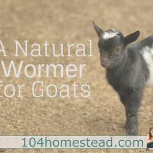 DWorm: A Natural Wormer for Goats