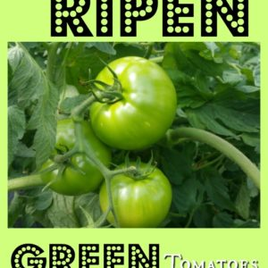 How to Ripen Stubborn Green Tomatoes