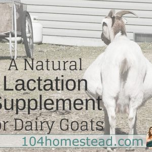 MilkMaid: A Natural Lactation Supplement for Dairy Goats