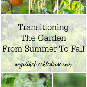 Transitioning The Garden From Summer To Fall