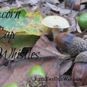 Acorn Cap Whistles – A Fun Nature Activity