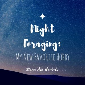 Night Foraging: My New Favorite Hobby