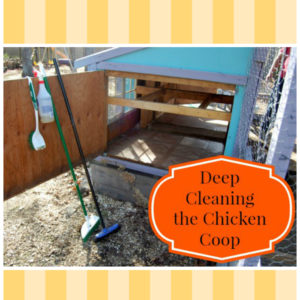 Deep Cleaning the Chicken Coop
