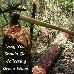 Why It's A Good Idea To Collect Green Wood