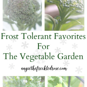 Frost Tolerant Favorites For The Vegetable Garden