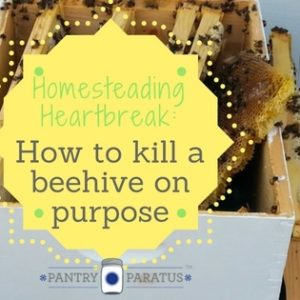 Homesteading Heartbreak: How to Kill a Beehive on Purpose