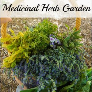 How to Plan and Plant a Medicinal Herb Garden
