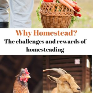 Homesteading Lifestyle – Why Homestead?
