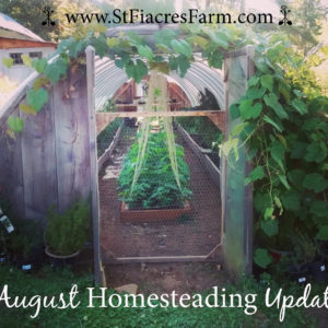 August Gardening and Homesteading