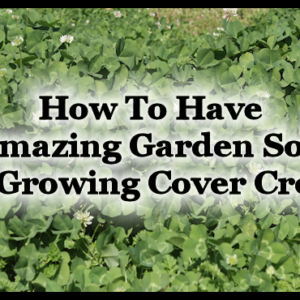 How To Have Amazing Garden Soil by Growing Cover Crops