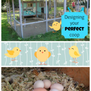 Designing Your Perfect Coop