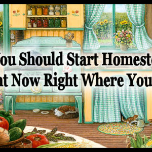 Why You Should Start Homesteading Right Now Right Where You Are