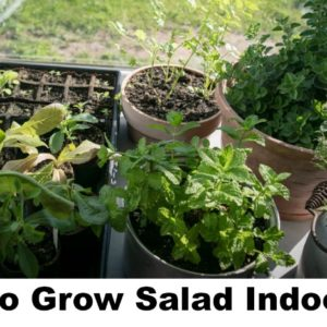 How To Grow Salad Indoors