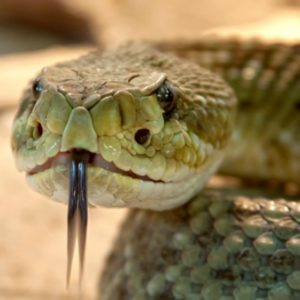 Knowledge of Snake Bite First Aid Can Save Lives