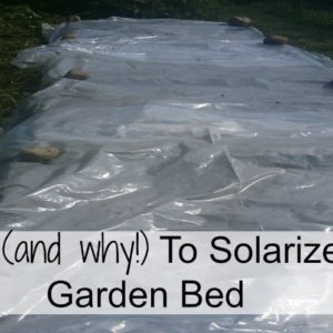 How (and why!) To Solarize A Garden Bed