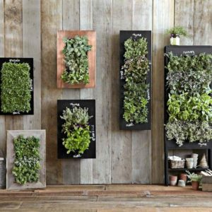 Wall-Mounted Planters are Ideal for Herbs and Small Spaces