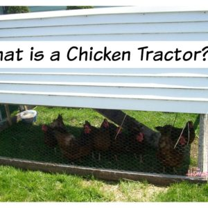 What is a Chicken Tractor?