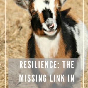 Why We Need to Breed Resilient Livestock