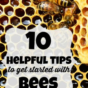 10 Helpful Tips to Get Started With Bees