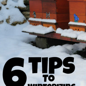 6 Tips To Winterizing Bee Hives