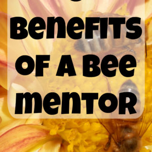 8 Benefits of Finding a Bee Mentor