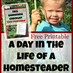 A Day in the Life of a Homesteader Fall Edition